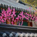 ミギカタアガリ旅行社でソウル:5月19日放送