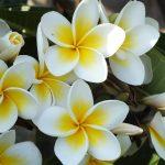 「イロハワイ〜ハワイの色を巡る旅〜」オワフ島紹介スポット2018年10月15日放送